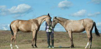Молодые лошади